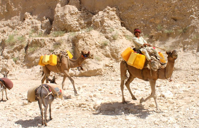 An Afghan man carries barrels of water on camels in Balkh province in northern part of Afghanistan, Aug. 5, 2014.