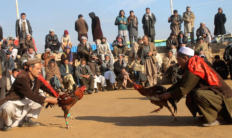 Afghan men watch a cock-fighting tournament in Balkh province, north Afghanistan, Jan. 24, 2015.