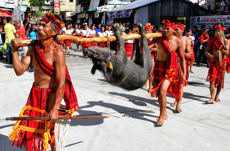 Tribesmen carry a pig during the celebration of Imbayah Festival in Banaue town, Ifugao province, the Philippines, April 27, 2015.
