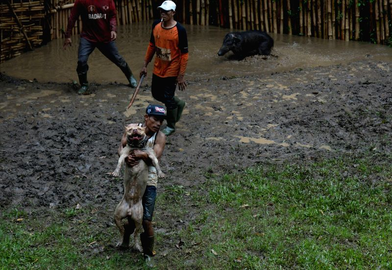 "BANDUNG, April 30, 2017 - A man holds his dog after fighting with a wild boar during a traditional battle which local people call it ""Adu Bagong"" in Bandung, Indonesia, April 30, 2017. Adu ..."