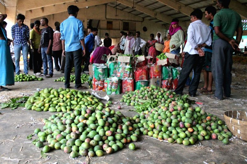 Banganapalli mangoes arrive at Kalmana Market of Nagpur from Andhra Pradesh  on April 6, 2016.