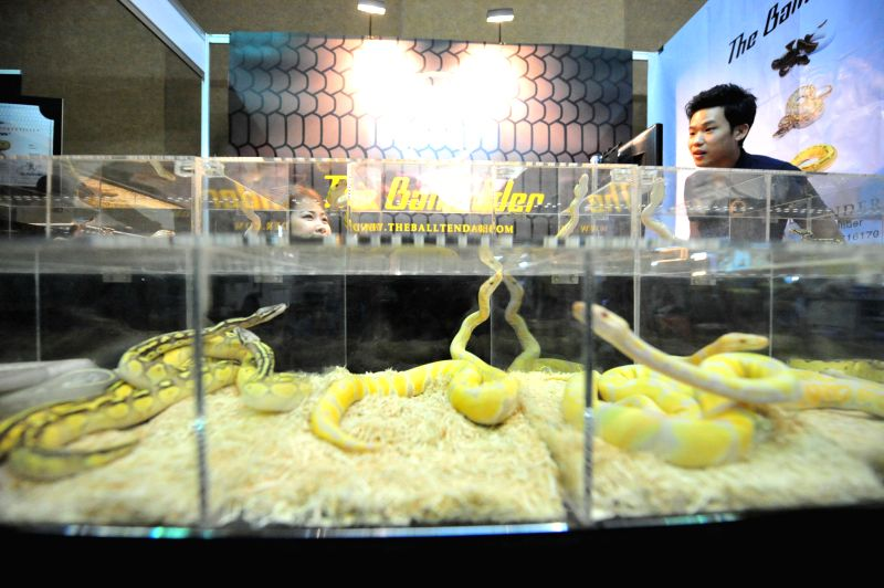 A man looks at snakes during the exhibition of Pet Variety And The City 2014 at Impact Muang Thong Thani in Bangkok, Thailand, Nov. 20, 2014. The exhibition is held here from Nov. 20 to Nov.