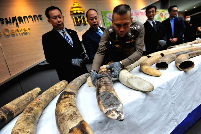 BANGKOK, Jan. 12, 2018 - Thai customs and police officers display confiscated African elephant tusks at the Customs Department in Bangkok, Thailand, Jan. 12, 2018.  Thai authorities have seized 34 ...