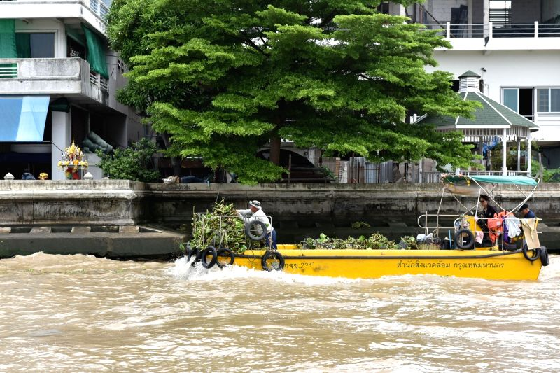 BANGKOK, June 12, 2017 - A worker clears the water hyacinth and other wastes on the Chao Phraya River in Bangkok, Thailand, June 12, 2017. A massive operation has been launched earlier to remove ...