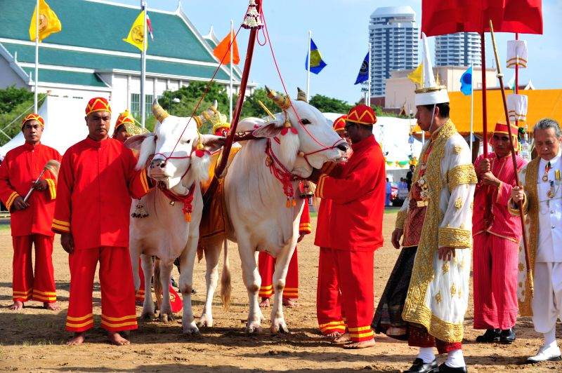 The Royal Ploughing ceremony master Chavalit Chookajorn (front) walks around sacred oxen during the Royal Ploughing ceremony in Bangkok, Thailand, May 9, 2014. The ...