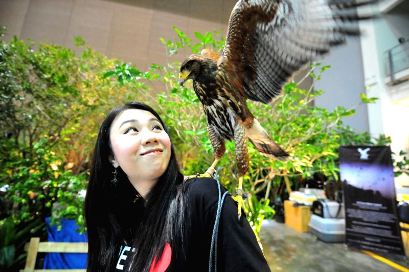 Bangkok (Thailand): A woman looks at a harris's hawk during the exhibition of Pet Variety And The City 2014 at Impact Muang Thong Thani in Bangkok, Thailand, Nov. 20, 2014. The exhibition is held ...