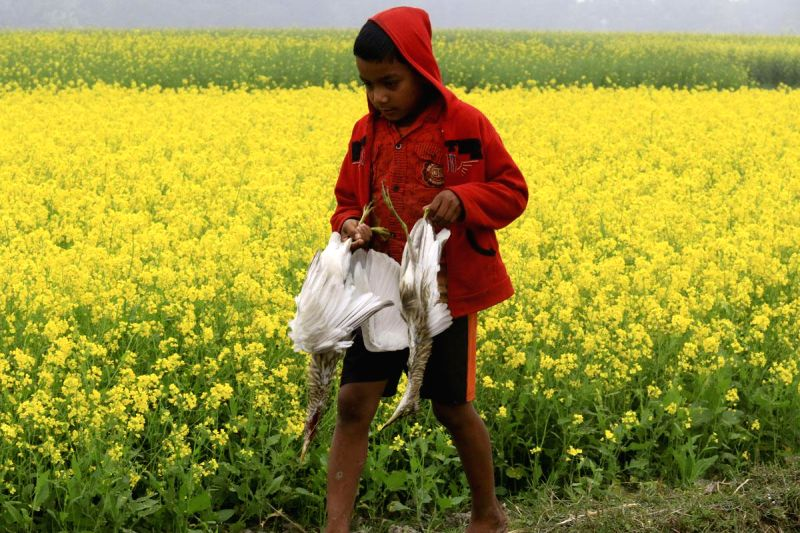 A child carries his catch back home after hunting in Bangladesh on Dec 28, 2014.