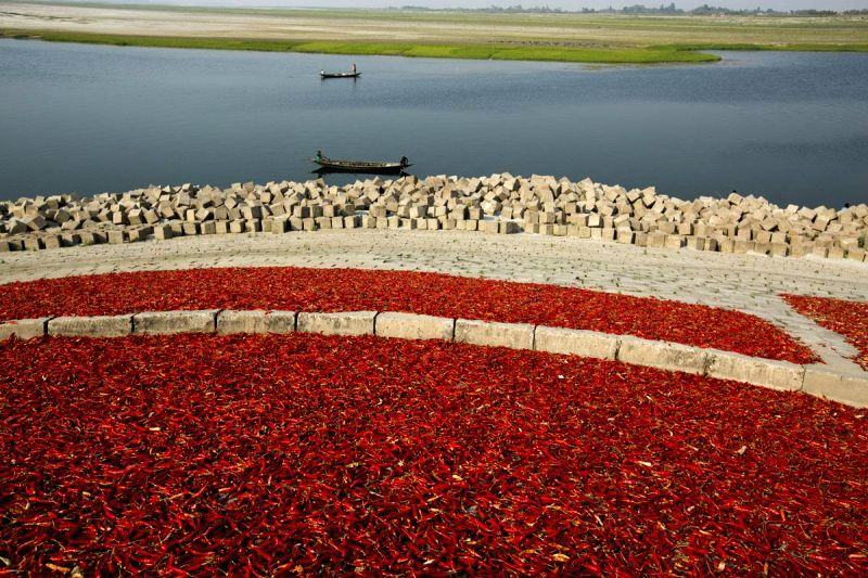 Farmers keep red chilies out in sun to dry in Bangladesh on March 15, 2015.