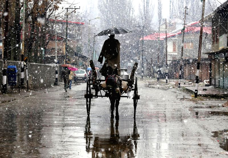 A horse cart plies on a Baramulla road amidst heavy snowfall on Feb 19, 2015.