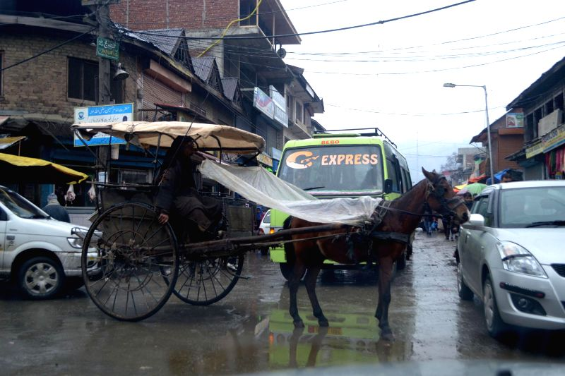 A man sits on a horse-cart as rain lashes Baramulla, in Jammu and Kashmir on Jan 13, 2015.