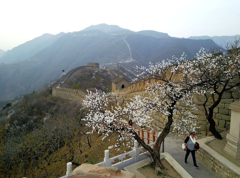 BEIJING, April 11, 2017 (Xinhua) -- Aerial photo taken on April 10, 2017 by a drone shows the spring scenery of the Mutianyu section of the Great Wall in Huairou, a mountainous district in the north of Beijing, capital of China. (Xinhua/Luo Xiaoguang
