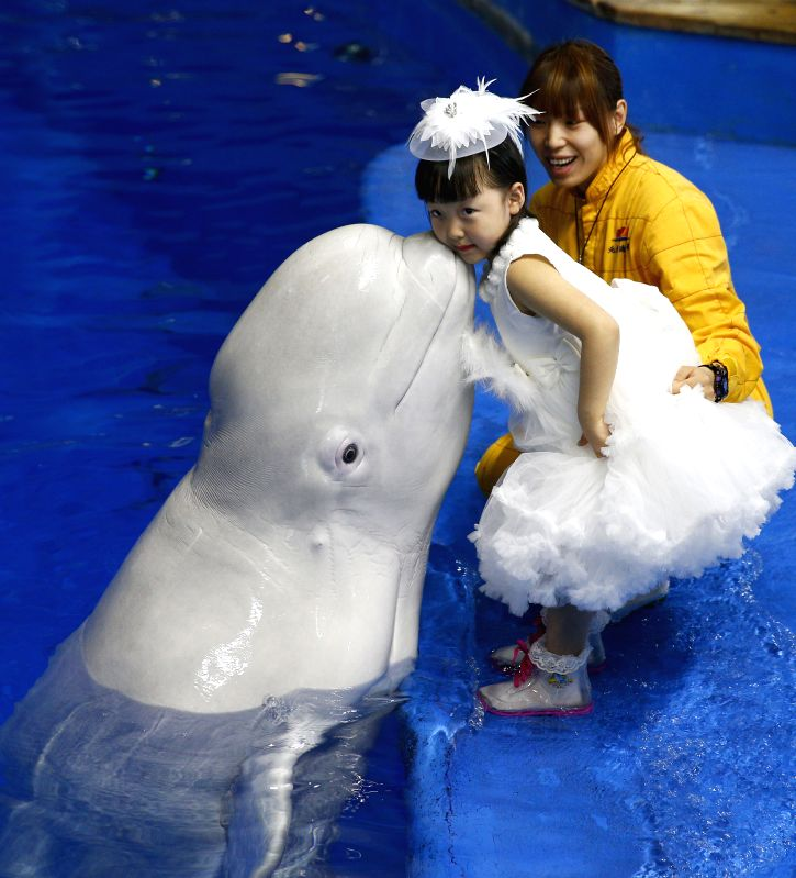 A beluga kisses a girl during the launch ceremony of Children's Painting and Calligraphy Competition at the Beijing Aquarium in Beijing, capital of China, April ...