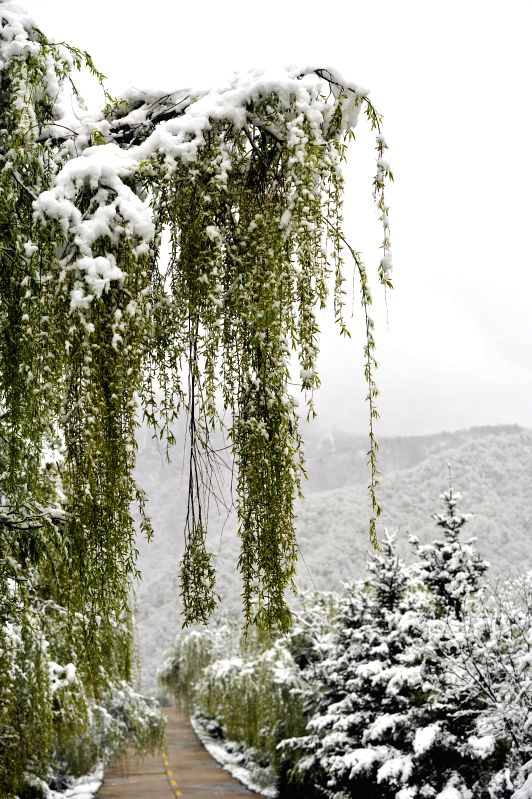 Photo taken on April 25, 2014 shows a lane after snow in Luren Village of Longnan City, northwest China's Gansu Province. A snowfall hit some areas in Gansu ...