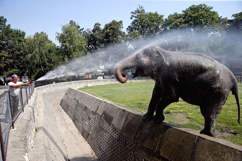 BELGRADE, Aug. 5, 2017 - A zoo worker sprays water to a female elephant to cool her down in Belgrade zoo, Serbia, on Aug. 5, 2017. A warning was issued Friday for extreme weather for most of next ...