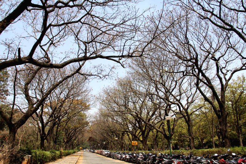 A view of Cubbon Park during the spring season in Bengaluru, on March 1, 2015.