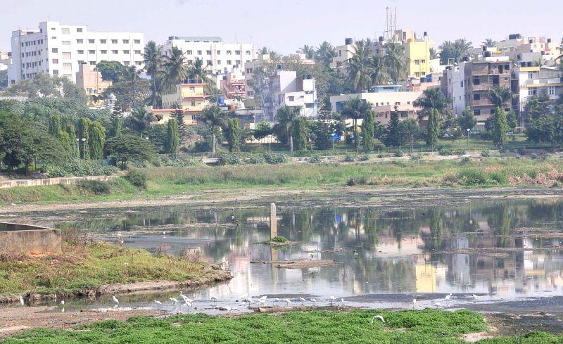 A view of polluted Kempambudi Lake which was inspected by Bangalore Mayor Shanta Kumari on Dec 2, 2014.