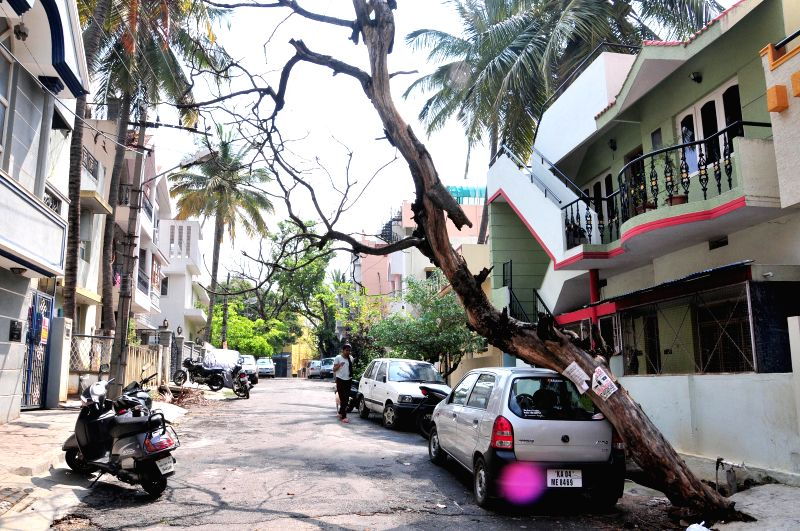 A view of the trees that were uprooted during heavy rains that lashed Bengaluru; on March 4, 2015.