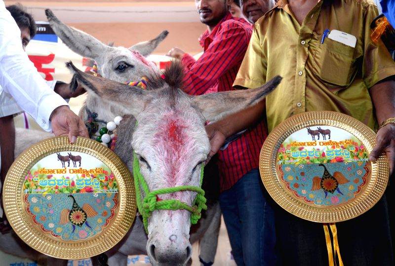 Donkeys being felicitated during `Rajyotsava` - an award ceremony organised at Kemepegowda Bus stand, in Bengaluru on Jan. 6, 2014.