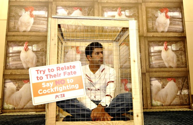Indian tennis player Rohan Bopanna locks himself in a cage during an animal rights campaign organised by PETA in Bengaluru, on Dec 16, 2014. Bopanna protested against `Cockfighting` and ...