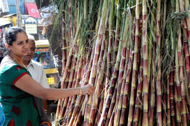 People buy sugarcane on the eve of `Sankranti` (Pongal) in Bengaluru, on Jan 13, 2015.