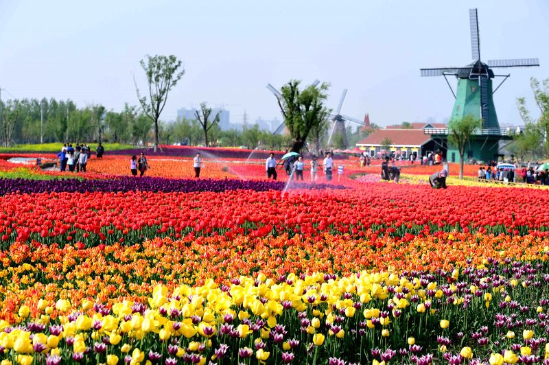 Tourists view tulips at Qinhuang Park in Binzhou, east China's Shandong Province, April 25, 2015. More than three million bulbs of tulip were planted in the park. ...