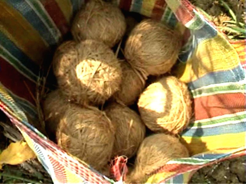 The crude bombs that were recovered from Palsa village under Panrui police station area in Birbhum district of West Bengal on Jan 13, 2015.