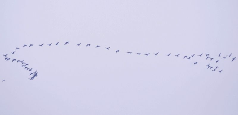 Birds fly in Kolkata skies on Jan 8, 2019.