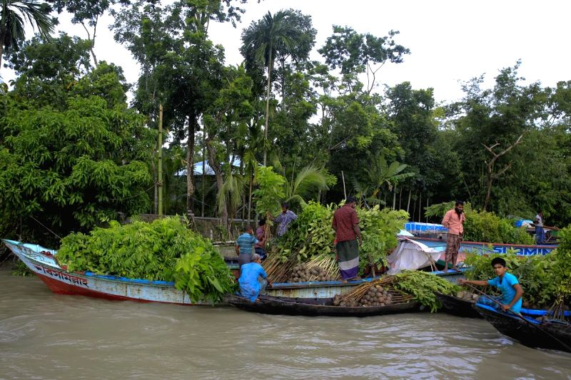 Boatmen sell plants from their boats at Mahmudkathi of Bangladesh on Aug 7, 2016.