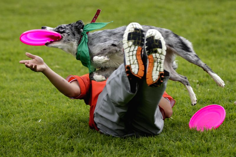 "A man plays with his dog during the ""Pet Run"" race at Simon Bolivar park, in the city of Bogota, Colombia, on May 17, 2015.  (Xinhua/Mauricio ..."