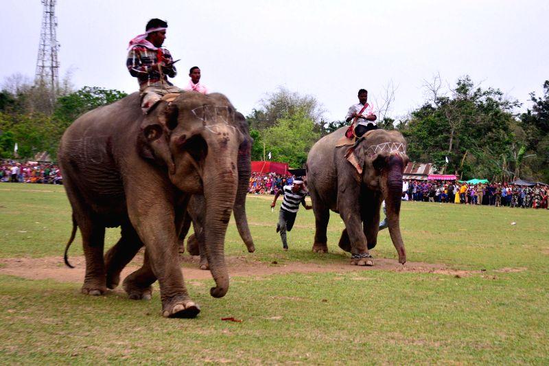 Elephant race underway during Suwori festival in Boko of Assam on April 21, 2015.