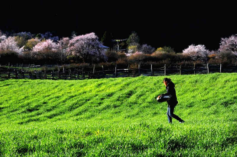 A villager walks in the field in Bomi County, southwest China's Tibet Autonomous Region, March 28, 2015.