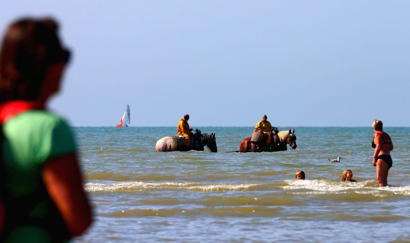 Xavier Vanbillemont and other shrimpers fish in the sea in Oostduinkerke, Belgium, Aug. 7, 2014. The shrimp fishing on horseback in Oostduinkerke has a history ...