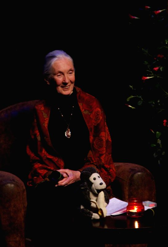 World renowned primatologist Jane Goodall attends a ceremony to mark her 80th birthday in Brussels, May 7, 2014.