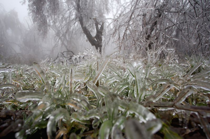 : Frozen grass and trees are seen after heavy sleet in a forest in Budapest, Hungary, on Dec. 2, 2014.