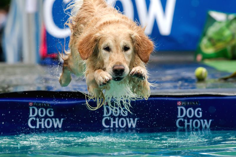 A dog jumps into the water during a dog diving competition in Budapest, Hungary on May 18, 2014.Dog diving is free time sport testing the skill of the dogs. The ...