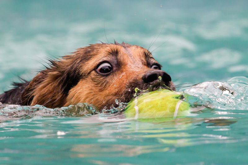 A dog participates in a dog diving competition in Budapest, Hungary on May 18, 2014.Dog diving is free time sport testing the skill of the dogs. The owner throws a