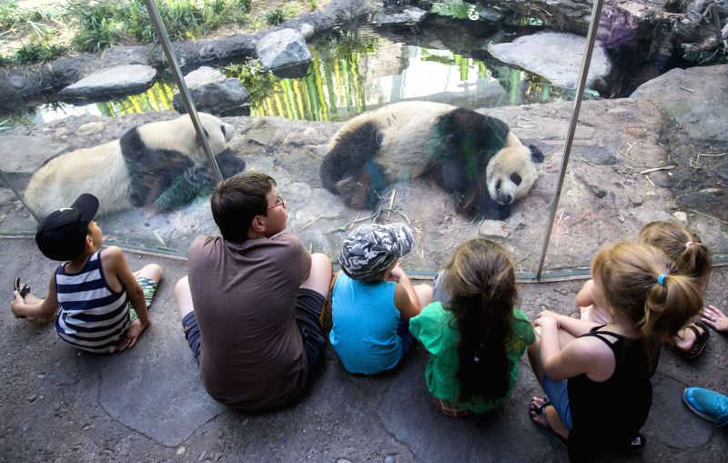 CALGARY (CANADA), July 16, 2018 People visit Panda Passage at the Calgary Zoo in Calgary, Canada, on July 16, 2018. After moving to the Calgary Zoo from Toronto in March, giant panda cubs ...