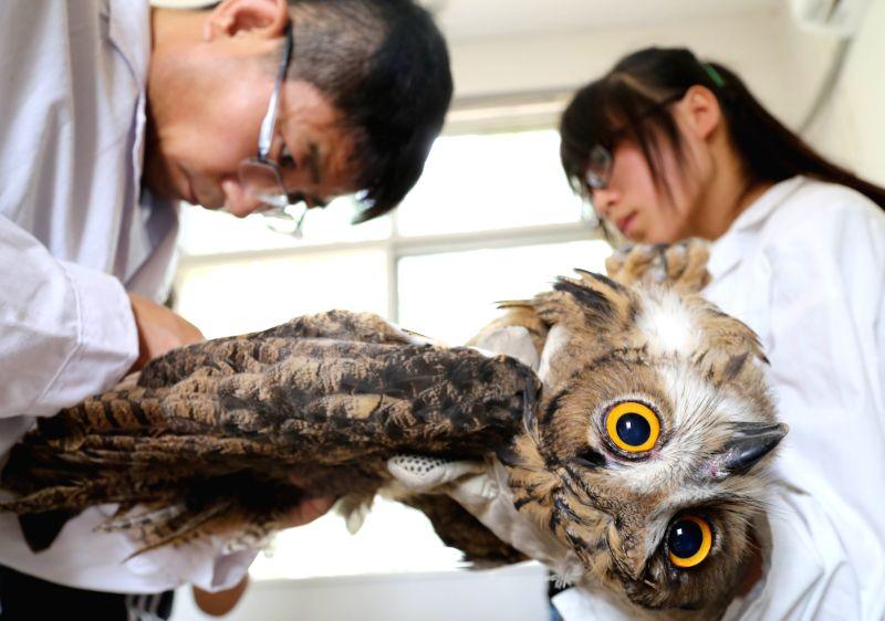 Volunteers from a wildlife rescue center examine an eagle owl before it is released back into the wild in Cangzhou, north China's Hebei Province, July 10, 2014.