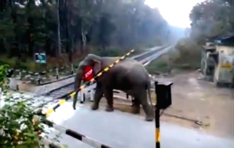 Caption: Clipping of elephant crossing track goes viral on Twitter.
