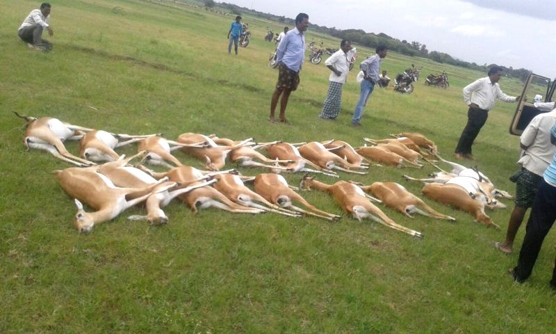 Carcass of deer that died of alleged food poisoning in Mahabubnagar of Telangana on Aug 8, 2016.