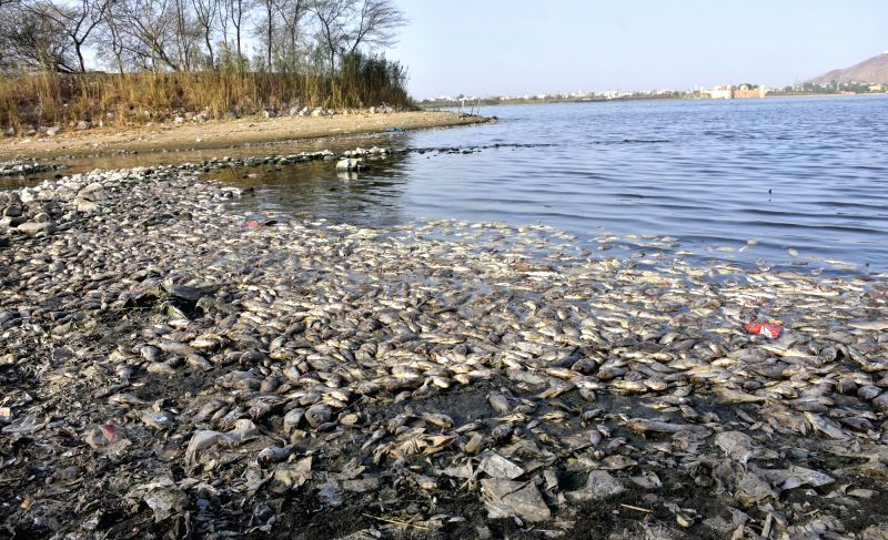 Carcass of fishes rot on the banks of Man Sagar Lake that is infamous for water pollution in Jaipur, on June 2, 2016.