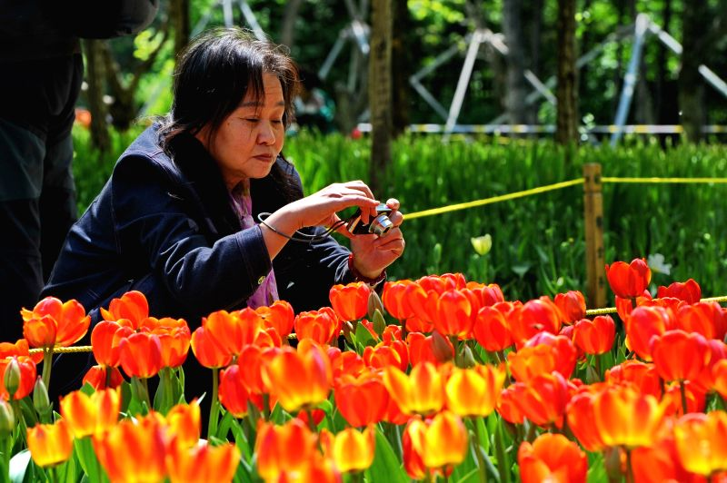 A woman takes photos of tulip flowers at a park in Changchun, capital of northeast China's Jilin Province, May 13, 2014.