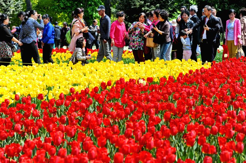 Tourists view tulip flowers at a park in Changchun, capital of northeast China's Jilin Province, May 13, 2014.