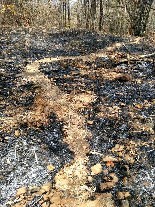 Charred turf at the encounter site in Sukma district in Chhattisgarh bares the ordeal of a deadly encounter which claimed 25 cops on Monday. (Pioneer Photo)