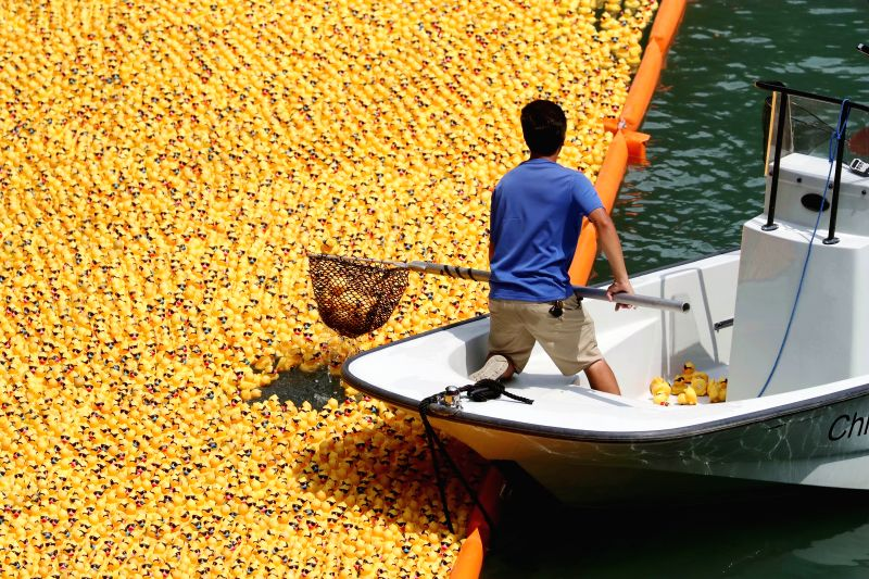 CHICAGO, Aug. 9, 2018 - A volunteer recovers rubber ducks from the Chicago River following the 13th Annual Chicago Ducky Derby in Chicago, the United States, Aug. 9, 2018. Derby organizers dropped ...
