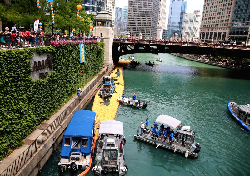 CHICAGO, Aug. 9, 2018 - Volunteers recover rubber ducks from the Chicago River following the 13th Annual Chicago Ducky Derby in Chicago, the United States, Aug. 9, 2018. Derby organizers dropped ...
