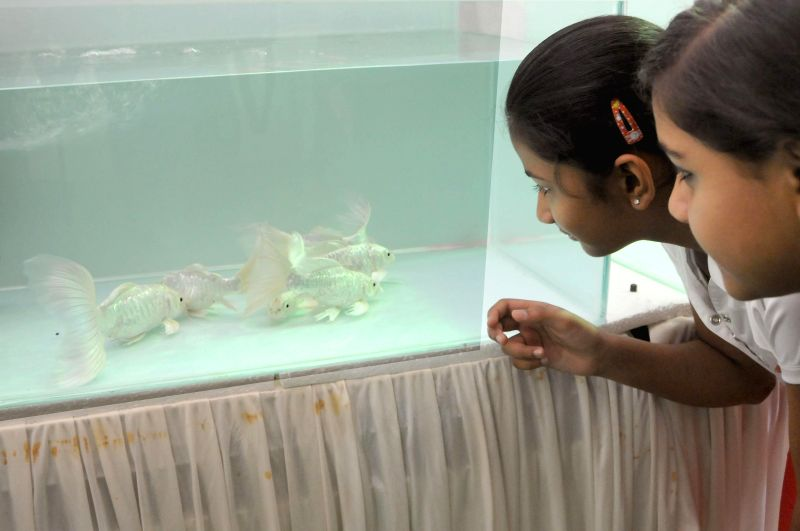 Children look at fishes in an aquarium during Aqua Life 2014 exhibition at Freedom Park in Bangalore on April 18, 2014.