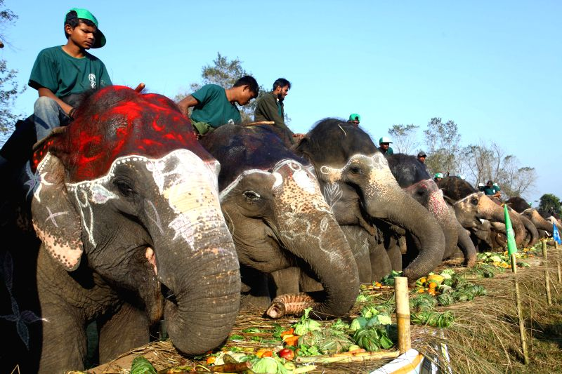 Photo taken on Dec. 27, 2014 shows elephants eating fruits and other foods during the Elephant Picnic at Chitwan, Nepal. 127 elephants participated in the Elephant .