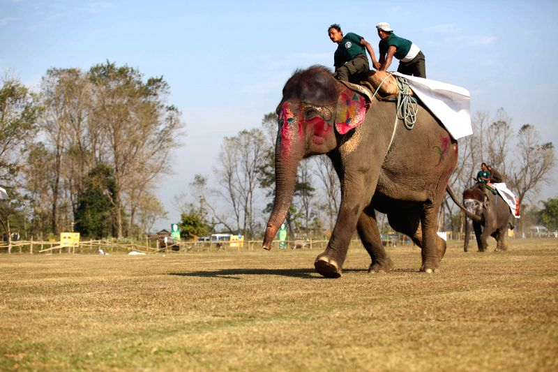 An elephant races in a competition during the 11th Elephant Festival which was organized by Regional Hotel Association of Chitwan at Sauraha in Chitwan, Nepal, Dec.