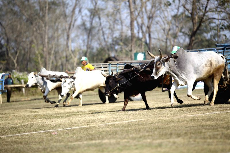 People race on ox carts to the finishing line during the Elephant Festival in Sauraha, Chitwan, Nepal, Dec. 29, 2014.